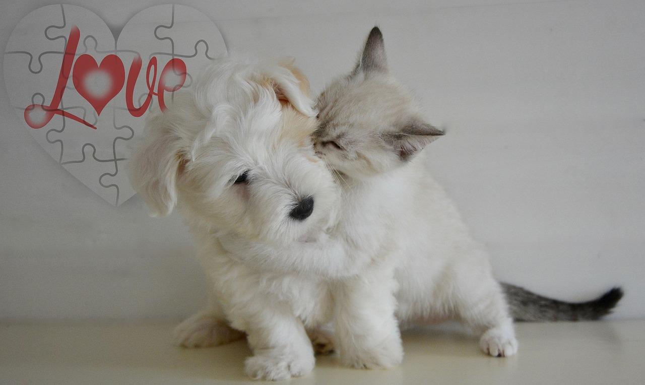 jak ubezpieczyć kota lub psa